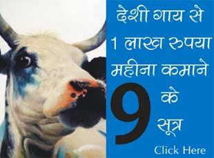 देशी गाय से 1 लाख रुपया महीना कमाने के 9 सूत्र